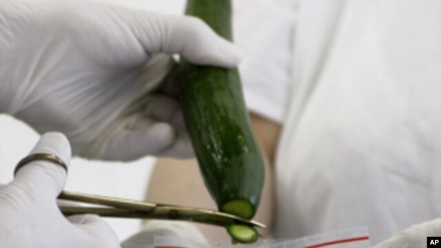 Samples are taken from a cucumber for a molecular biological test in Brno, Czech Republic on Wednesday, June 1, 2011.