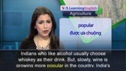 Anh ngữ đặc biệt: India Wine (VOA)