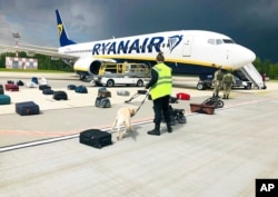 Security use a sniffer dog to check the luggage of passengers on the Ryanair plane, carrying opposition figure Raman Pratasevich, in Minsk International airport, May 23, 2021, in this photo provided by ONLINER.BY.
