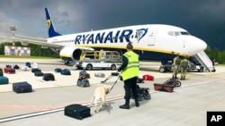 ຕໍາຫລວດຮັກສາຄວາມສະຫງົບໄດ້ເອົາໝາດົມກິ່ນໄປກວດດົມເບິ່ງຫີບຂອງຄົນໂດຍສານໃນເຮືອບິນຂອງ Ryanair ທີ່ຂົນສົ່ງ ທ່ານ Raman Pratasevich ທີ່ເປັນນັກຕໍ່ຕ້ານລັດຖະບານທີ່ວໍາຄັນຢູ່ສະໜາມບິນສາກົນຂອງນະຄອນຫລວງມິງສ໌ ໃນວັນທີ 23 ພຶດສະພາ, 2021 (ພາບສະໜອງໃຫ້ໂດຍ ONLINER.BY.)