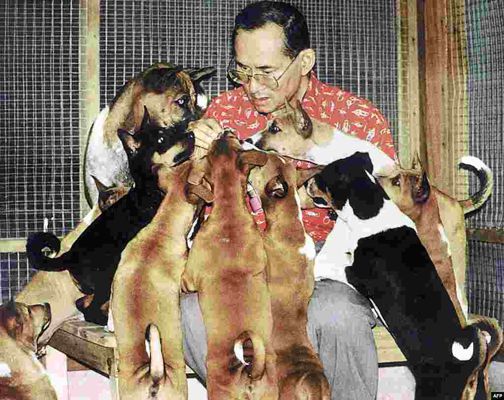 This undated handout photo received 26 Dec. 2002 shows Thai King Bhumibol Adulyadej and his dogs at the Royal Palace in Bangkok. The tale of a stray dog born that won the heart of the country's much-loved king has recently become the nation's latest publishing sensation.