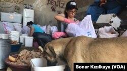 Şantiyede yaşayan köpekler de paparadan paylarına düşeni alıyor.