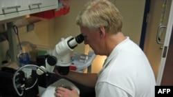 Nghiên cứu về tế bào gốc