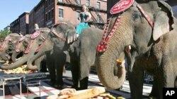 Atraksi gajah pada pertunjukan grup sirkus 'Ringling Brothers Barnum & Bailey' (foto: dok).