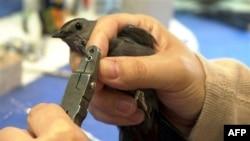 Ptičja opservatorija