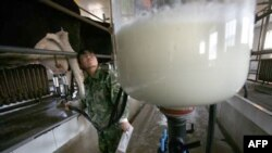 Công nhân Trung Quốc giám sát sữa được hút vào một thùng chứa thủy tinh khổng lồ tại một trạm sữa ở vùng tây bắc Trung Quốc