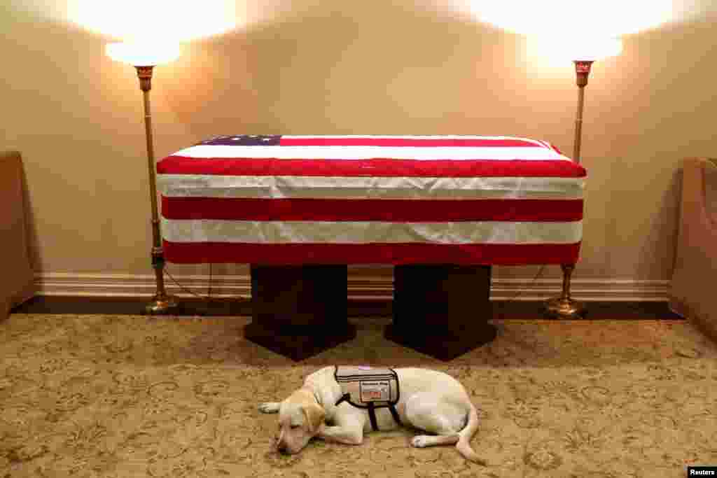 Sully, the service dog of former U.S. President George H.W. Bush in his final months, lays in front of Bush's casket at the George H. Lewis & Sons funeral home in Houston, Texas, U.S.
