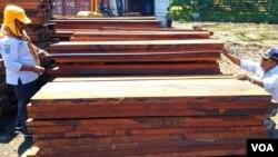 Petugas dari Dinas Kehutanan Provinsi Jawa Timur melakukan pengukuran dan pengujian terhadap barang bukti kayu ilegal hasil operasi Gakkum KLHK (foto: VOA/Petrus).
