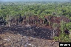 فارم بنانے کے لیے جنگل کے کنارے آگ لگا کر زمین حاصل کر لی جاتی ہے۔