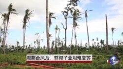 海燕台风后,菲椰子业艰难复苏