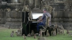Musician Plays for Monkeys in Thailand