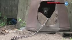 ABD'de Hayvanlara İşkence ve Zulüm Artık Federal Suç
