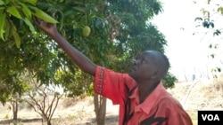Paul Alim Amol grows mangoes, guava, lemons, oranges, pawpaw, and sugar canes. (VOA/Deng Ghai)