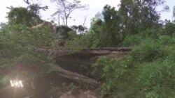 Des plantations de cacao dans une réserve forestière ivoirienne