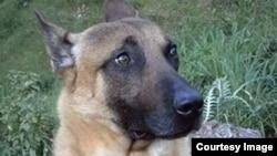 Diesel was killed in a raid following the Paris terrorist attacks.