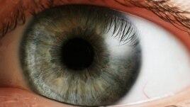 Parandalimi i verbërisë