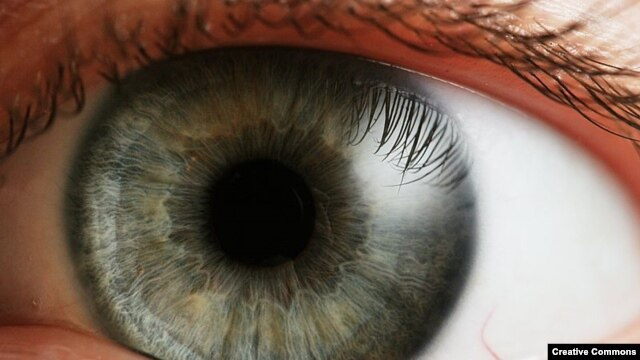 Scientists say they have taken a major step in reversing common forms of blindness.