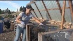 Як волонтери у Сіетлі перетворили закинуту ділянку землі на найбільший громадський город у США. Відео