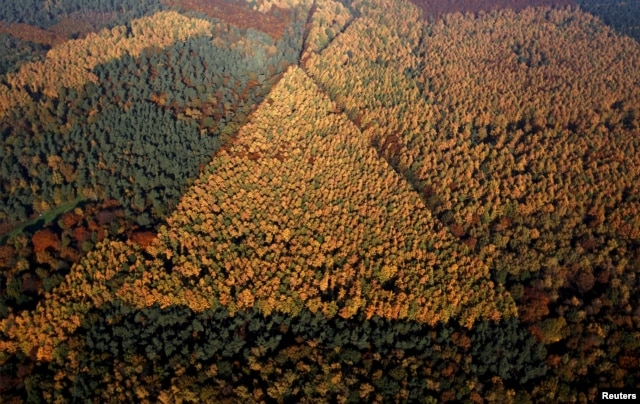 FILE - An aerial view shows a mixed forest on a sunny autumn day in Recklinghausen, Germany, Oct. 31, 2015.