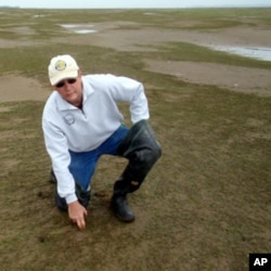 Northern Oyster Co. owner Brain Sheldon says his business has been devastated by Japanese eelgrass.