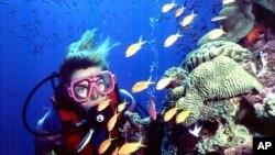 This undated photo shows a diver off Australia's coast.