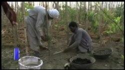 لاہور کا ماحول دوست جنگل