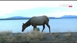 Юбилейный год национальных парков США