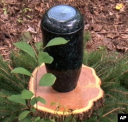 Ashes are buried at the base of trees in biodegradable urns made of corn starch.