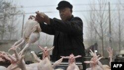 Quầy gà ở một khu chợ trong tỉnh Sơn Ðông ở Trung Quốc