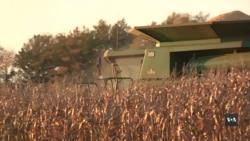 Куди подіти рекордний врожай зернових у США? Фермери чекають відповідей від Трампа. Відео