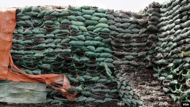 The stockpile of charcoal in Bur Gabo is estimated to be worth several millions dollars, Bur Gabo, Somalia, July 5, 2012. (Roopa Gogineni/VOA)