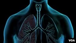 Para periset dari Pusat Riset Kanker Fred Hutchinson di Seattle, AS sedang mengembangkan tes darah baru untuk mencari protein kanker paru-paru.