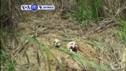 VOA60 AFIRKA: Masu Bincike Na MDD Sun Gano Kaburbura 17 a Congo