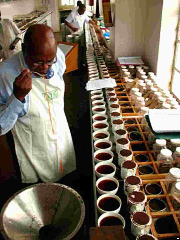 Tom Muchura, director of Africa Tea Brokers, tastes hundreds of tea every week, February 15, 2012