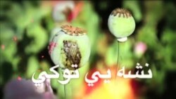 د هرات څخه د مخدراتو په اړه راپور