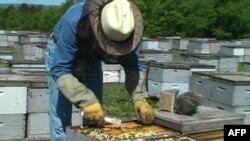 Nagrada naučnici - ekspertu za pčele