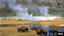 Yellowstone National Park stretches across the states of Wyoming, Montana and Idaho. It was America's first national park.