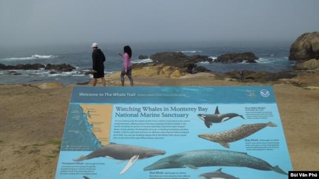 Khu sinh thái Vịnh Monterey (Ảnh: Bùi Văn Phú)