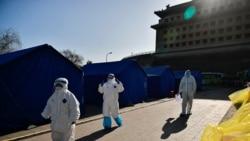 世卫疑与北京关系暧昧 武汉病毒溯源深不可测?