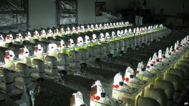 Bradley Cardinale built 50 mock streams in his laboratory for the three-year experiment.