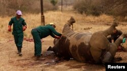 Workers examine a dead rhino after poachers killed it for its horn. (Kruger National Park, Kenya, 2011)