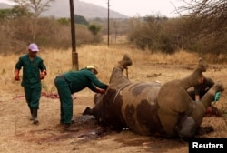 FILE - Workers perform a post-mortem on the carcass of a rhino after it was killed for its horn by poachers at the Kruger national park in Mpumalanga province, South Africa, Sept. 14, 2011. A rhino horn can sell for up to $23,000.
