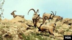 Wildlife in Kurdistan