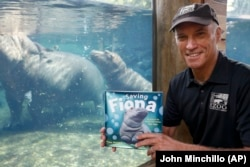 Cincinnati Zoo director Thane Maynard sits for a photograph beside the enclosure of Fiona, their baby Nile Hippopotamus, in Cincinnati, Ohio.