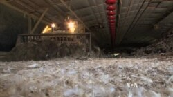 Maryland's Chicken Pollution Problem Highlights Global Issue