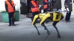 У Чорнобилі випробували робота Boston Dynamics. Відео