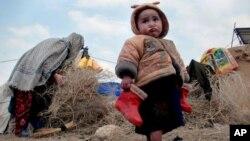 بیجاشدگان داخلی بیشتر در ساحات شهری پناه برده اند