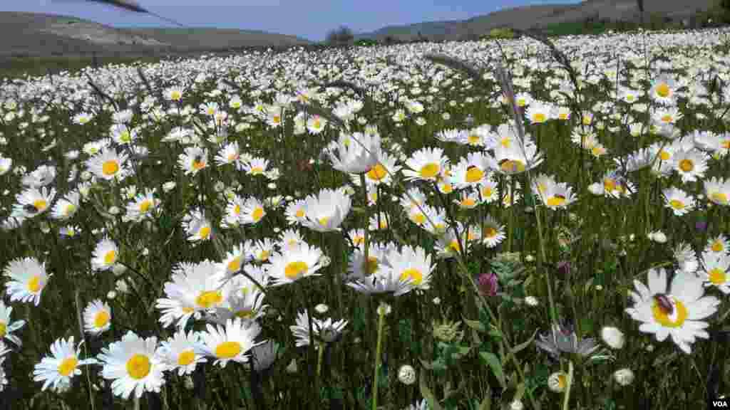 طبیعت زیبای نمین در استان اردبیل - عکس: محسن(ارسالی شما)