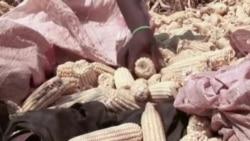 Live Talk - Serious Food Shortages Grip Zimbabwe