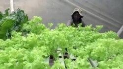 Zimbabwe Woman Finds Success in Farming Despite Drought
